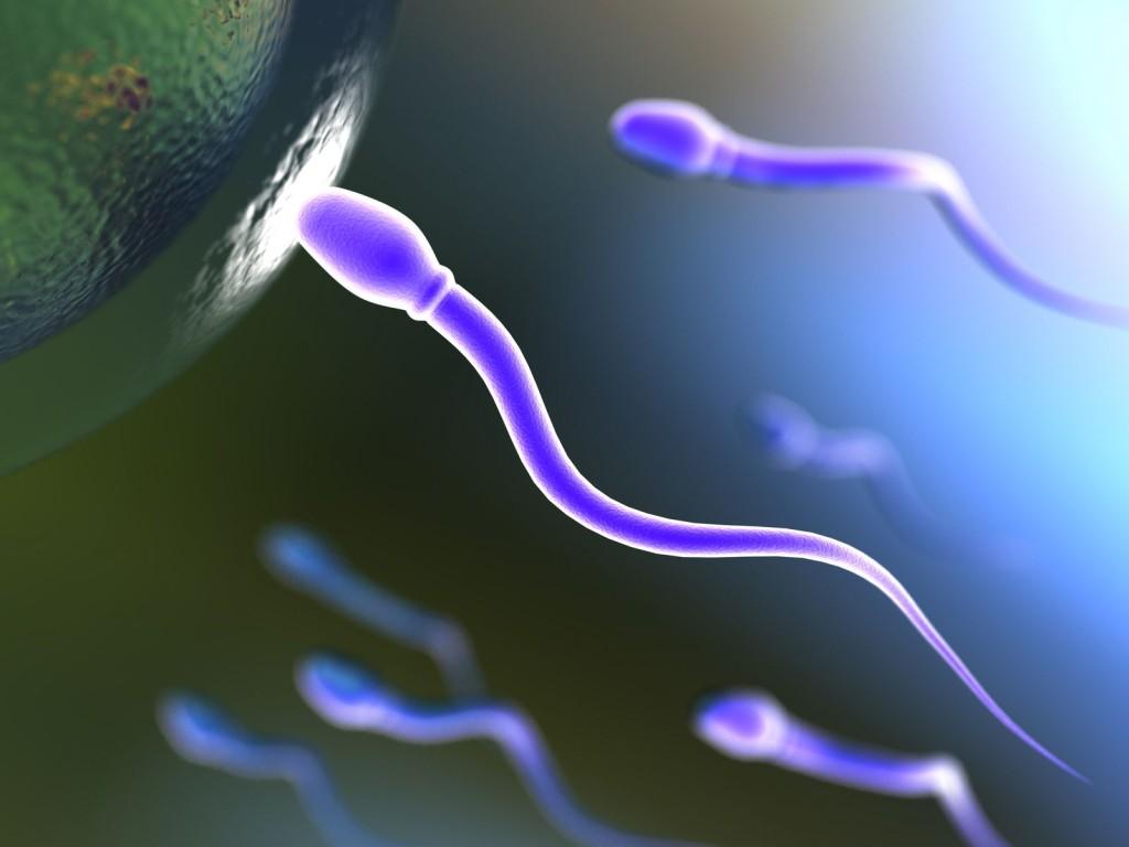 sperma1